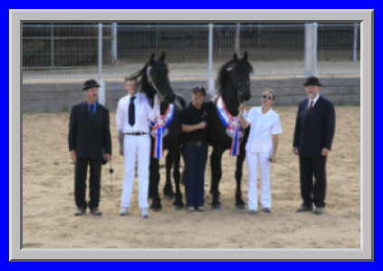 Best Friesian mares at the keuring